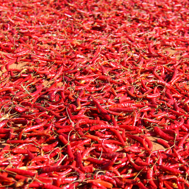 Piments rouges myanmar red chili peppers